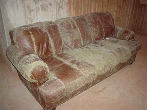 Turkey Mites Quotes Mold On Leather Sofa