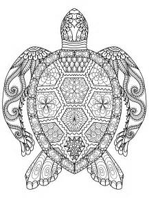 Coloring pages for adults coloring page turtle mandala img 4545
