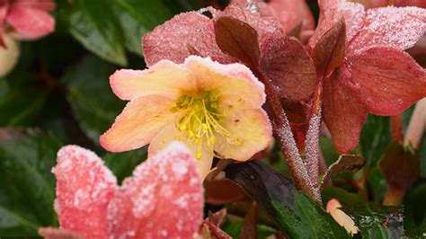 fiori a novembre quali fiori fioriscono a novembre floraqueen italia