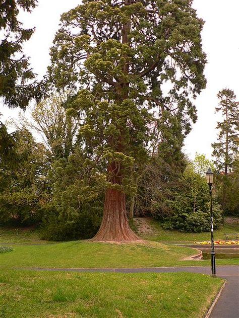 cedar trees cedar tree pictures facts on cedar trees