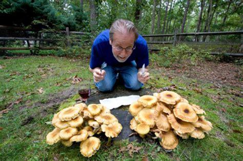 funghi da giardino fughi fiori e foglie