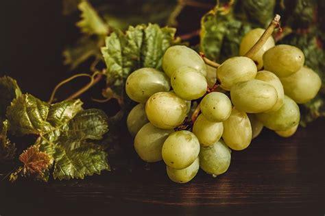 piantare uva da tavola coltivare uva da tavola guida per principianti