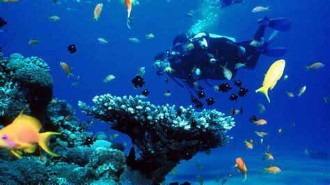 dive in aqaba touristic attractions bright