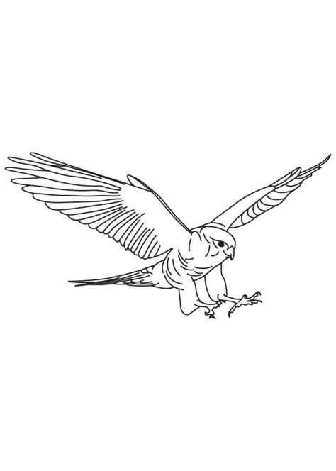 free coloring pages of birds in flight free coloring pages of birds in flight