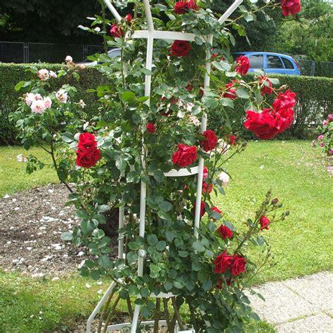 Welche Rosensorten Gibt Es 3544 by Tolle Gartentipps Rankger 252 Ste Und Kletterhilfen F 252 R