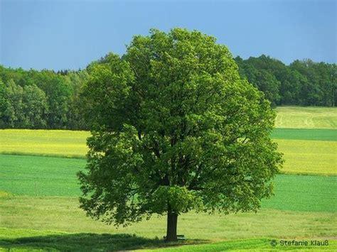 imagenes de arboles zen 193 rboles im 225 genes y fotos