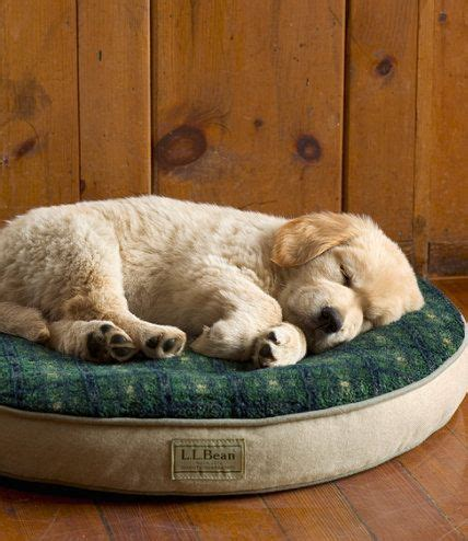 llbean dog bed pinterest the world s catalog of ideas