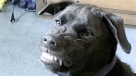 funny animal compilation   petsami youtube