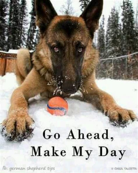 how to make dogs like you 1000 ideas about german shepherds on