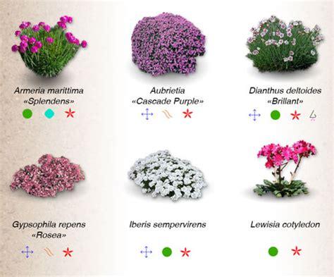 fiori per giardini rocciosi fiori per giardini rocciosi fiori per giardini rocciosi