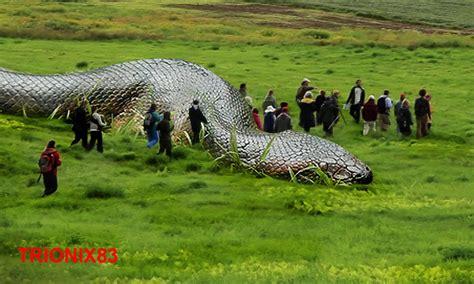 imagenes anacondas reales anacondas gigantes reales anacondas mas grandes del mundo