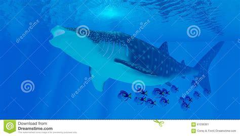 balena alimentazione alimentazione dello squalo balena illustrazione di stock