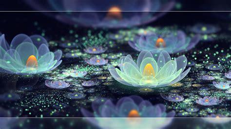 lotus pond pictures lotus pond fan 37302065 fanpop