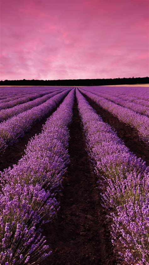 wallpaper lavender field sky mountain provence france