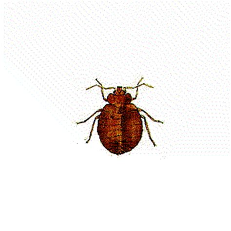 wood destroying insect certification pest inspections pacific crest inspections