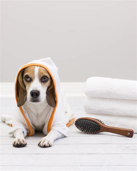 how to bathe a puppy wellness how to bathe a and some pawsh magazine