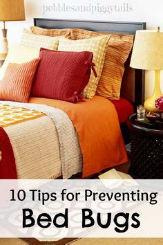 How To Keep Bed Bugs Away by Bed Bugs On Bed Bugs Treatment Bed Bug Trap
