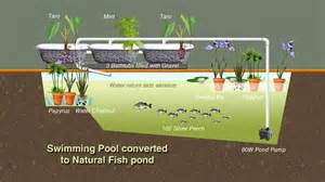 Backyard Biodiesel Converting A Swimming Pool To Grow Fish The Permaculture