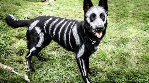best dogs the 8 best pet costume ideas