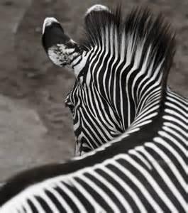 noir et blanc ou blanc et noir vos plus belles photos