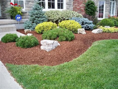 Bushes For Landscaping Evergreen Landscaping Plants