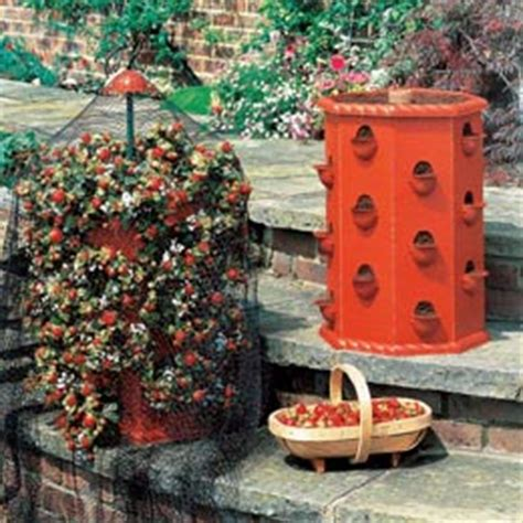 Strawberry Barrel Planter by Patio Planters Containers Patio Potato Barrel Patio