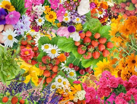 wallpaper flower mix simple collage mix imagination from bright summers flowers