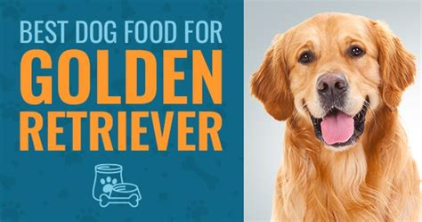 what is the best puppy food for golden retrievers what is the best food for golden retrievers in 2018 animalso