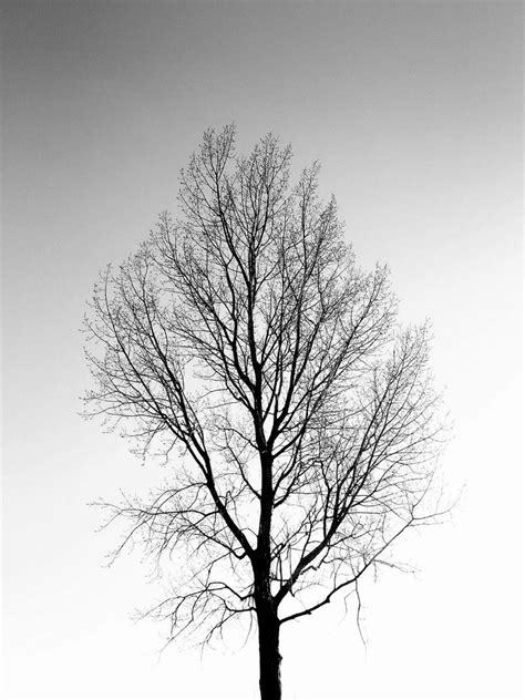 bald tree in black and white by kisjaah on deviantart