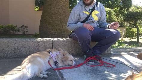 come fare i fiori di bach fiori di bach rimedi naturali per aiutare i cani my pet