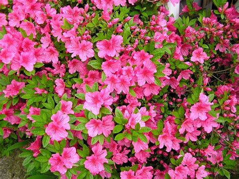 piante da interno purificano l piante da interno contro l inquinamento piante