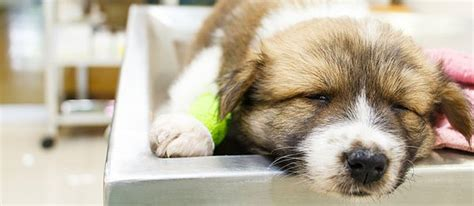 sick puppy symptoms one sick puppy 7 puppy illnesses to look for care community