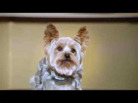 loca the pug lyrics pup song videolike