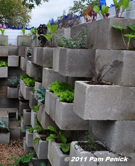 edible wall cinderblock wall vegetable garden wows at big