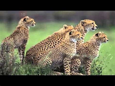 25 Strange Names For Groups of Animals - YouTube Groupings Of Animals