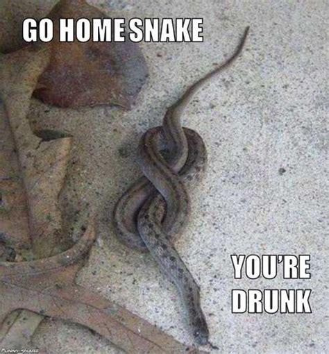 Snake Meme - go home you re drunk meme snake humor pinterest