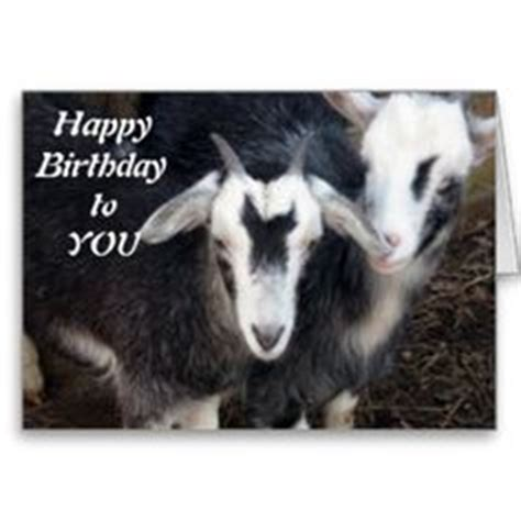 Happy Goat Meme - 1000 images about goats on pinterest funny goats