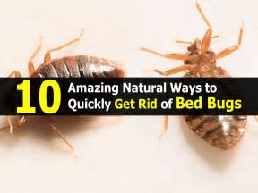 10 amazing ways to quickly get rid of bed bugs