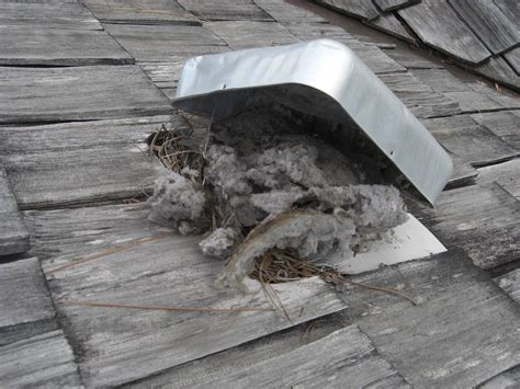 frugal roof caps for vent pipes for dryer vent
