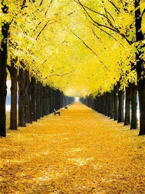 yellow fall leaves pictures photos and images for facebook tumblr pinterest and twitter