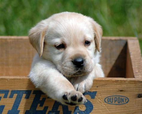 puppy s puppies puppies photo 29017071 fanpop