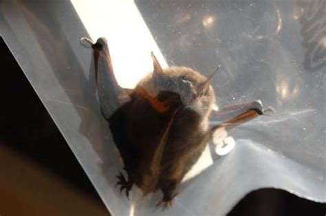 Bats In Fireplace Chimney by Side Trips New Use For Hefty Bags