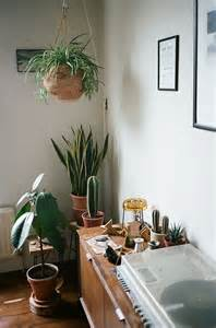 Best Plants For Living Room by Plants Hanging Plants And Cactus On Pinterest