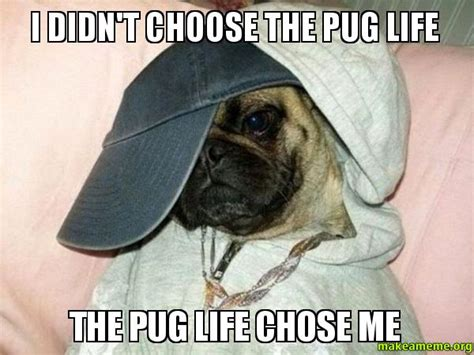 Pug Life Meme - i didn t choose the pug life the pug life chose me