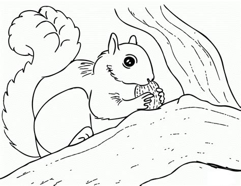 squirrel coloring page free printable squirrel coloring pages for
