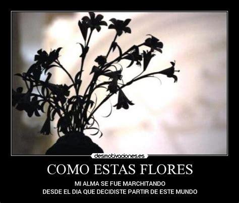 imagenes de flores marchitas imagenes de flores marchitas imagenesbellas