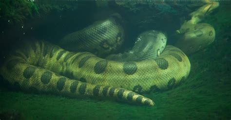 quels sont les besoins en eau chez votre serpent