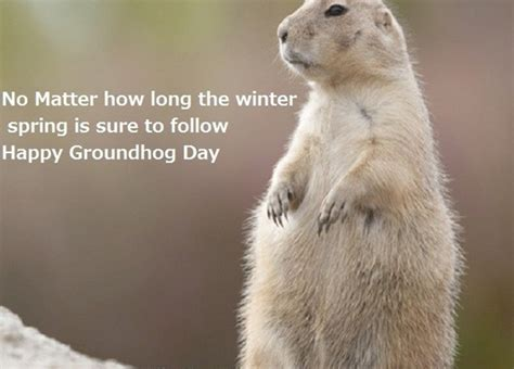 groundhog day quotes groundhog day quotes quotesgram happy groundhog