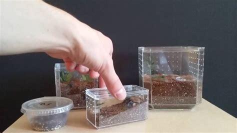 easy spiderling  tarantula enclosures  hobby lobby display cases youtube