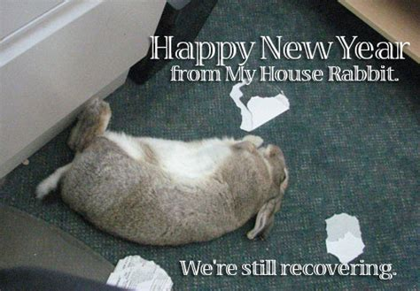 new year for rabbit happy new year my house rabbit